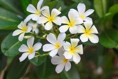Pleuvoir sur la fleur Images stock