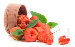 Plewa pomidory z liśćmi w drewnianym pucharze odizolowywającym na białym tle Fotografia Stock