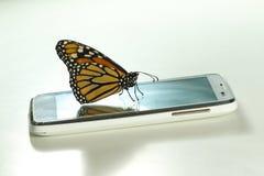 Plexippus van Danaus van de monarchvlinder op mobiele telefoonecologica Stock Fotografie