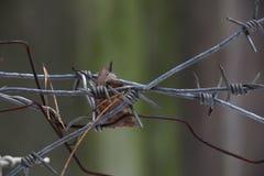 Plexo de oxidado y del alambre de púas, primer Fotografía de archivo libre de regalías