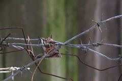 Plexus of barbed wire, closeup Stock Photos