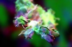 Plexus of beautiful particles, 3d illustration Royalty Free Stock Photo