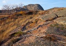 Plexus des racines sèches Photo libre de droits