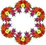 Plexus róże Zdjęcie Royalty Free