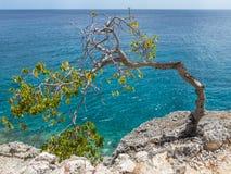 Plié au-dessus de l'arbre balayé par le vent - vues du Curaçao image libre de droits