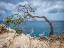 Plié au-dessus de l'arbre balayé par le vent - vues du Curaçao photo stock
