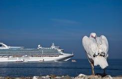 Plican durch das Meer, gegen eine Reiseflugzwischenlage Lizenzfreie Stockfotos