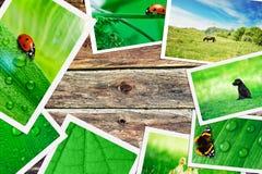 Plie των πράσινων εικόνων φύσης Στοκ εικόνα με δικαίωμα ελεύθερης χρήσης