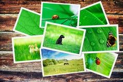 Plie των πράσινων εικόνων φύσης Στοκ Εικόνες