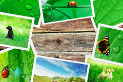 Plie of green nature pictures Royalty Free Stock Photos