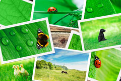 Plie of green nature pictures Stock Photo