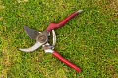 Plier gardening tool Royalty Free Stock Images