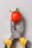 Pliers and cherry tomato Stock Images