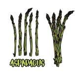 5 plików asparagus i badyle Zdjęcie Stock