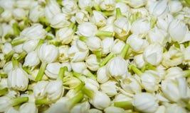 Plik jaśminowi kwiaty Zdjęcie Stock
