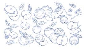 Plik monochromatyczni rysunki jabłka, plasterki, gałąź i kwiaty cali i rżnięci, Kolekcja świeży soczysty royalty ilustracja