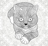 Plinth for t-shirts, . Coloring pages for adults. hand painted cat with an ethnic floral pattern. Abstract flower mandala. EPS 10 royalty free illustration