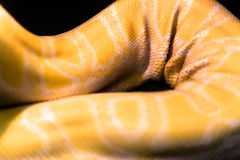 Plis jaunes de cuir de pyton Photo stock