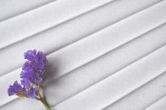 Plisse background with flower. Lavender color. stock photos