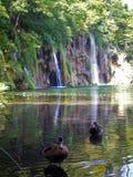 Plitvice湖、瀑布和鸭子 免版税库存图片