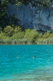 Plitvice湖国家公园,克罗地亚 库存照片