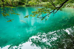Plitvice湖,克罗地亚清楚的水  库存照片