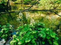 plitvice λιμνών της Κροατίας Το έδαφος του εθνικού πάρκου Στοκ Φωτογραφία