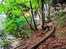 plitvice λιμνών της Κροατίας Πράσινοι δέντρα, λίμνη και καταρράκτης Στοκ φωτογραφίες με δικαίωμα ελεύθερης χρήσης