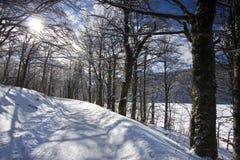 plitvice πάρκων nationa λιμνών της Κροατίας Στοκ Εικόνες