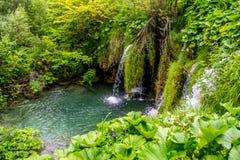 plitvice озер Хорватии Стоковое Изображение RF