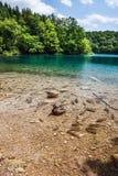 鱼和野鸭游泳在湖在森林 Plitvice,国立公园,克罗地亚 库存照片
