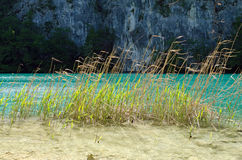Plitvice. Blades of Sedges. Blades of sedges in Tranquil Calm Lake. Plitvice, Croatia Stock Photography