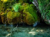 Plitvice, Croacia - cascadas del musgo Imagen de archivo libre de regalías