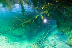 Plitvice crystal clear water Royalty Free Stock Image