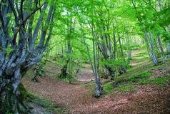 plitvice för croatia lakesnationalpark Fotografering för Bildbyråer
