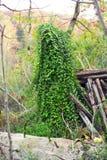 Plitvice i zielona dziwożona zdjęcie stock