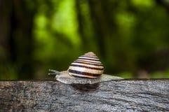 Plitvice jezior park narodowy, ślimaczek, bagażnik, las, zieleń, środowisko, góra, rezerwat przyrody, Chorwacja, Europa Zdjęcie Stock
