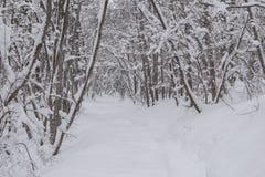 Plitvice jezior park narodowy, śnieg zakrywał naturę Naturalny krajobraz zamarznięty Plitvice jezior park narodowy Zdjęcia Stock