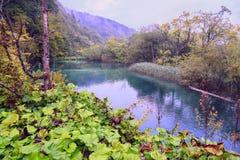 Plitvice jezior turkusu wody raju krajobraz Zdjęcia Stock
