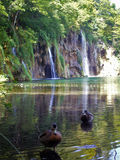 Plitvice jeziora, siklawa i kaczki, Obrazy Royalty Free
