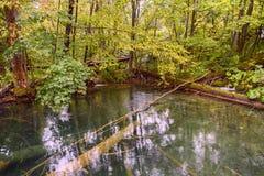 Plitvice jeziora stary parkowy Lasowy jezioro Obrazy Stock