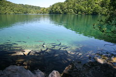 Plitvice lake fishes Royalty Free Stock Photos