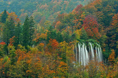 Plitvice lakes of Croatia (Hrvatska) - national park in autumn. Plitvice lakes of Croatia (Hrvatska) - the second biggest waterfall in the national park showing Royalty Free Stock Image