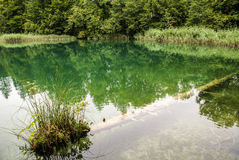 Plitvice lakes in Croatia - nature travel background Royalty Free Stock Photography
