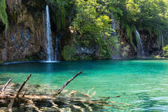Plitvice Lakes National Park (Croatia). Summer view of beautiful small waterfalls and  trunk of dry tree at the lake bottom (Plitvice Lakes National Park Royalty Free Stock Photo