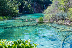 Plitvice Lakes National Park (Croatia). Summer view of beautiful small waterfalls and  trunk of dry tree at the lake bottom (Plitvice Lakes National Park Stock Images