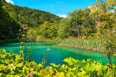 Plitvice Lakes National Park in Croatia,Europe Royalty Free Stock Images