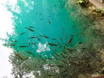 Fishes in Plitvice Lakes nature wonderland. Plitvice Lakes national park in Croatia nature wonderland with beautiful lakes and waterfalls royalty free stock image