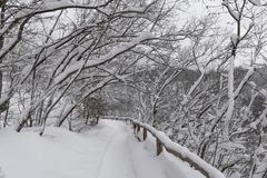 Plitvice Lakes National Park, snow covered nature. Natural landscape of frozen Plitvice Lakes National Park. Stock Photo