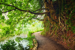 Plitvice lakes park in Croatia Royalty Free Stock Photography